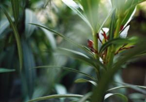 il-giardino-di-mia-madre-fotografie-di-claudi-L-5y7_5e
