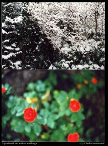 il-giardino-di-mia-madre-fotografie-di-claudi-L-cxg78b