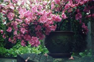 il-giardino-di-mia-madre-fotografie-di-claudi-L-xuxmbC