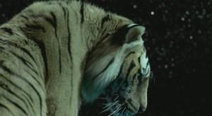 Richard Parker, la tigre