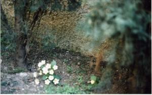 1C. Sottocornola, Il giardino di mia madre